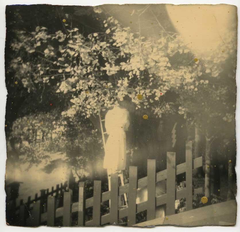 ماسائو یاماموتو آشنایی با عکاسان معاصر
