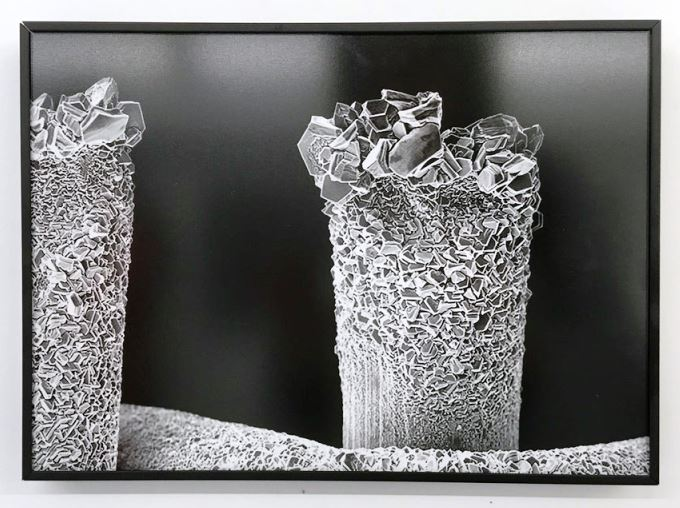amirhosein shaygan vali gallery 2