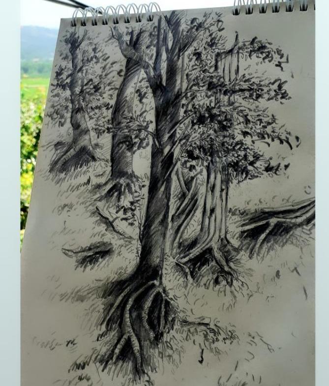 نمایشگاههای طراحی از جنگلهای هیرکانی