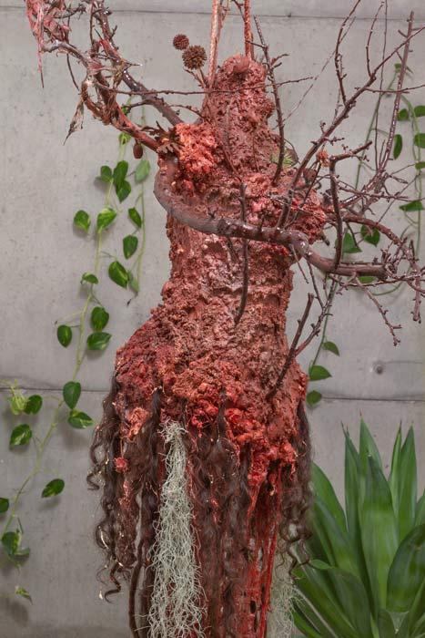 فاخته شمسیان درخت باژگون
